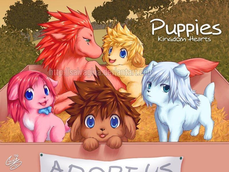 Kh Puppies X3